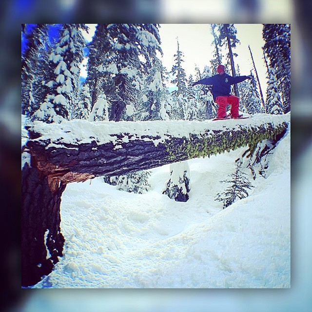 No @mikeburtongilaffe didn't take an axe to this tree...he took…